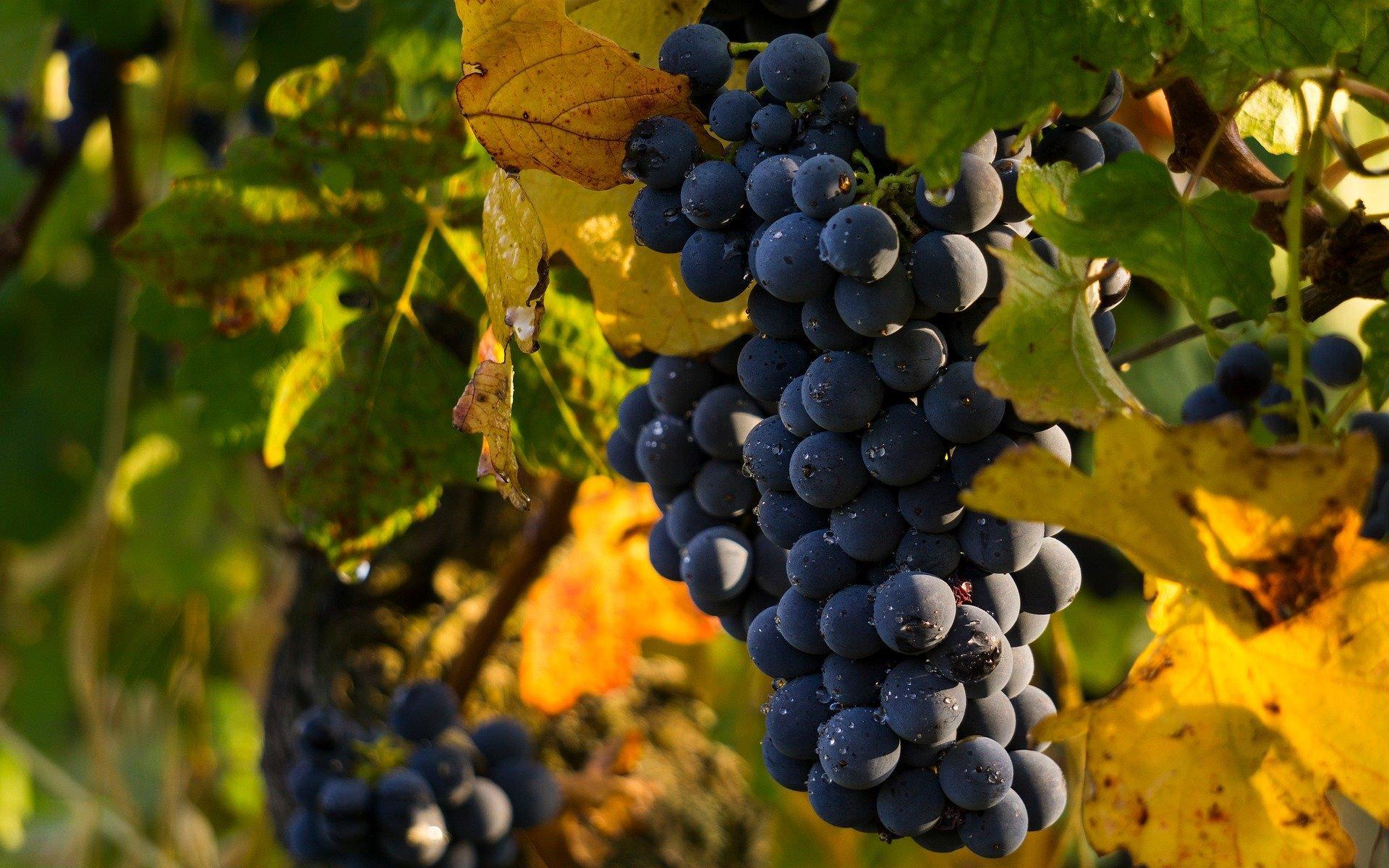 Chamard Winery